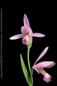 flowered plants