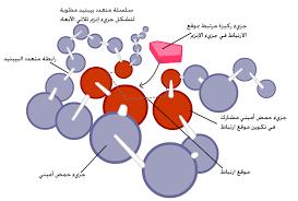 الانزيمات 800px-Enzymeactivesi