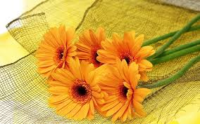 high resolution flower photos