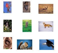 animal sheet