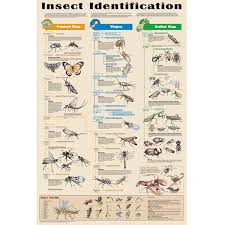 insect identification chart
