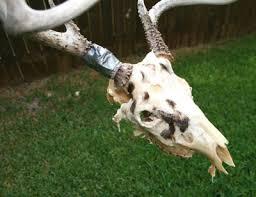 deer skull mounts