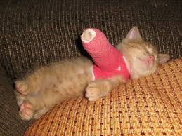 cat broken leg