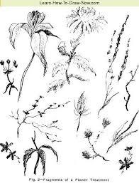 chrysanthemum drawing