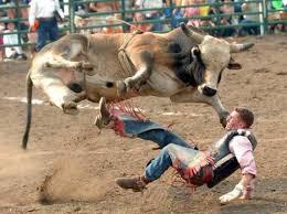 bull photos