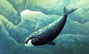 bowhead whale images