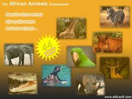 africa animal picture