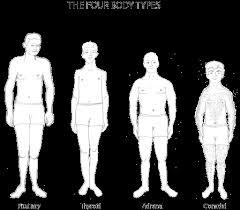 human body balance