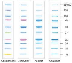 bio rad protein marker