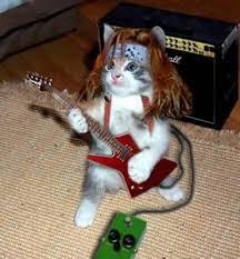 kitty rock