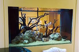 aquarium design pictures