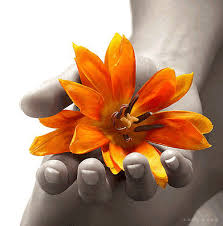 flower media