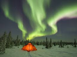 canada boreal forest