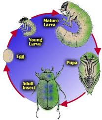 life cycle images