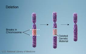 deletion of chromosome