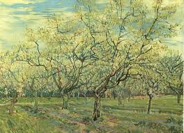 picture of orchard
