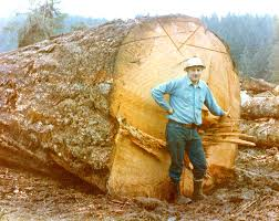 logging skidders