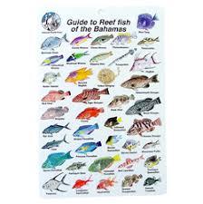 fish of the bahamas