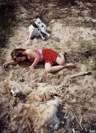 dead deer pictures