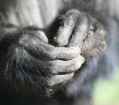 monkey hands