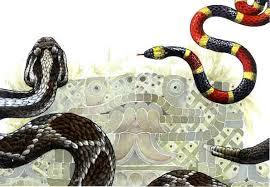 diferentes tipos de serpientes