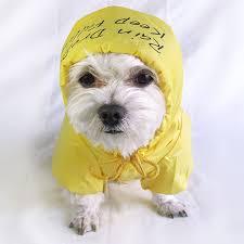 dogs raincoats