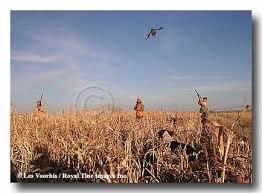 pheasant field