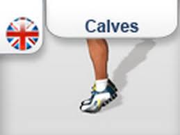 calf calves