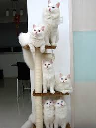 cat stand