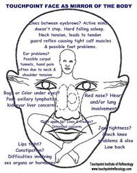 face reflexology chart