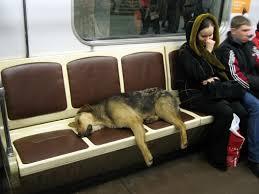 homeless puppies