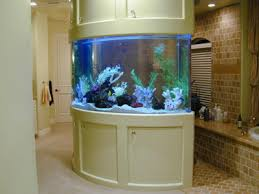 curved fish tank