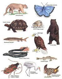 endangered species pics