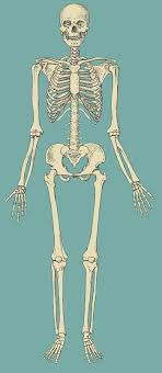 anatomical position pictures
