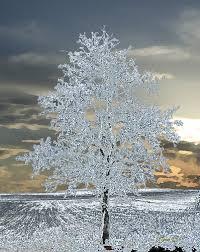 ice tree