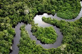 amazon vegetation