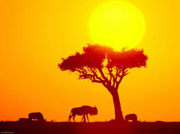 african wallpapers