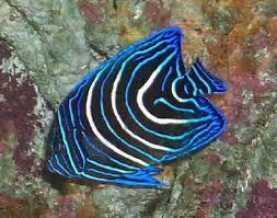 salt water reef fish