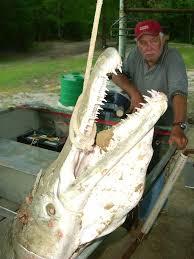 alligator gar fishing