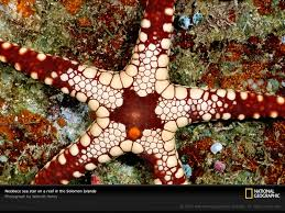 necklace sea star
