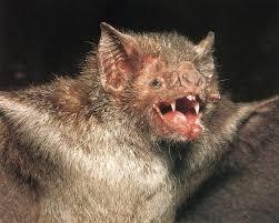 bats vampires