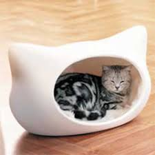 bed for cat