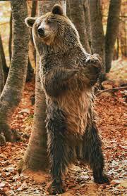 Lendas Urbanas do Zeebo - Página 6 Urso-1