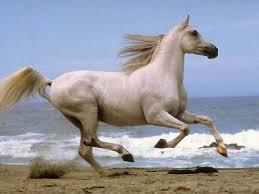 horse screensaver