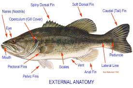 all fish types