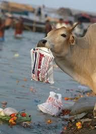 plastic bags killing animals