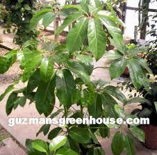 common houseplant photos