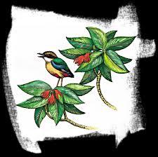 save the birds