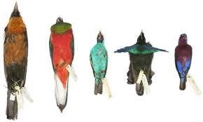 rare tropical birds