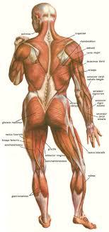 back of body